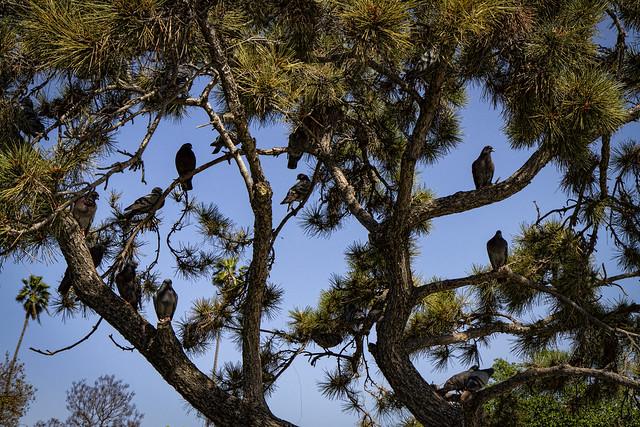 Birds at Wilderness Park