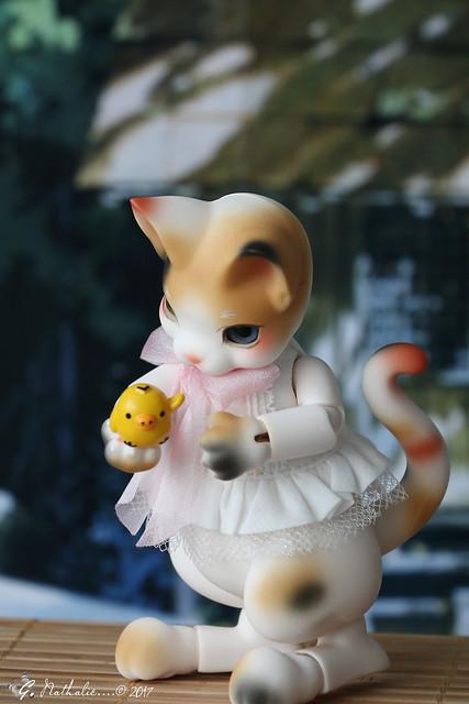 ✰ Ma famille de kitsune (p. 20) - Page 9 32752447126_c089b9707a_z