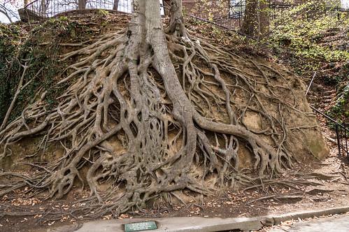 Medusa Roots