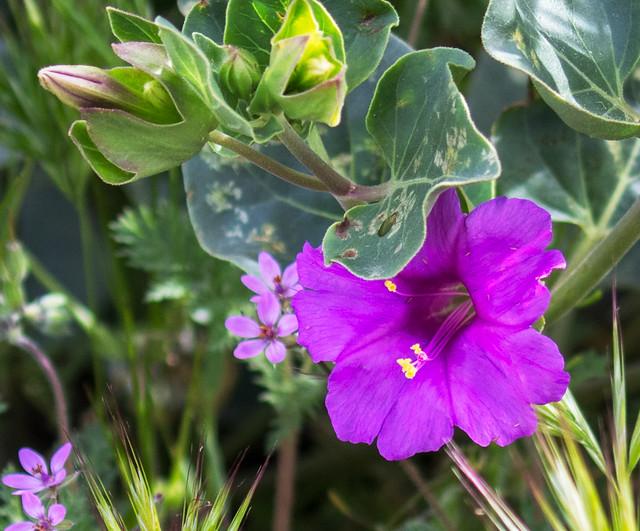 z-Flower-38-7D2-040817