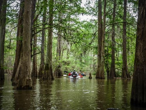 Sparkleberry Swamp-69