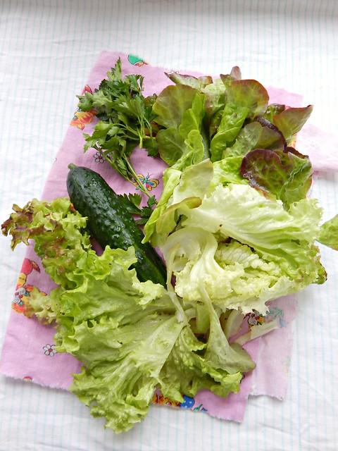 салат - листья