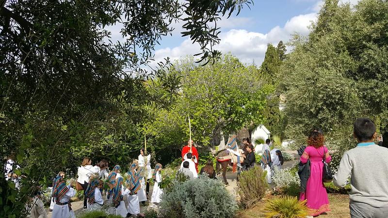 Procesión Domingo de Ramos, Pollinica viviente Sto. Cristo del Calvario