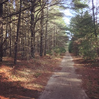 I Found Snippets of Trail Out Here #shirleyruns #trailrunning | by shirley319