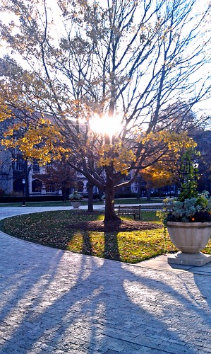 Early winter or late fall?  @UChicago | by michaelht