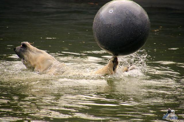 Tierpark Berlin 02.04.2017 049