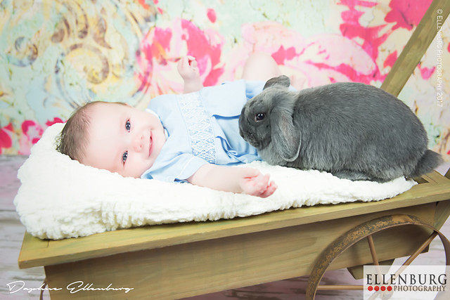 Baby in Wheel Barrel with Bunny