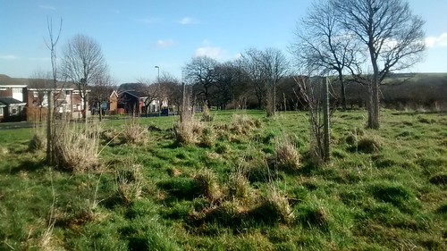 Kingsway Community Orchard Mar 17 (1)