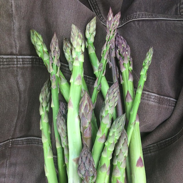 The asparagus corms we got from @radicalrootfarm a few years ago have finally worked through our management system (utter neglect). Yum. @breslinfarms #organic #asparagus #spring