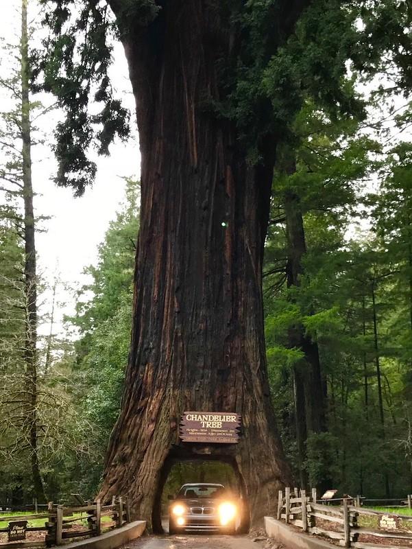 Drive-Thru Tree Park, Leggett, CA