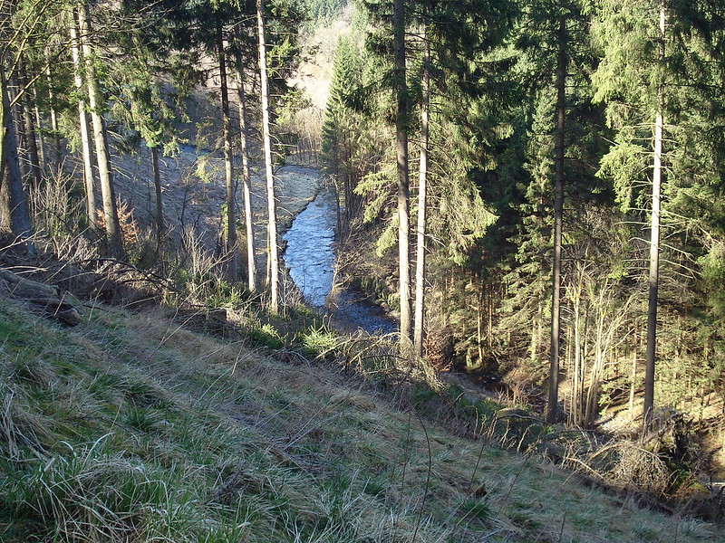 Narzissen-Route14