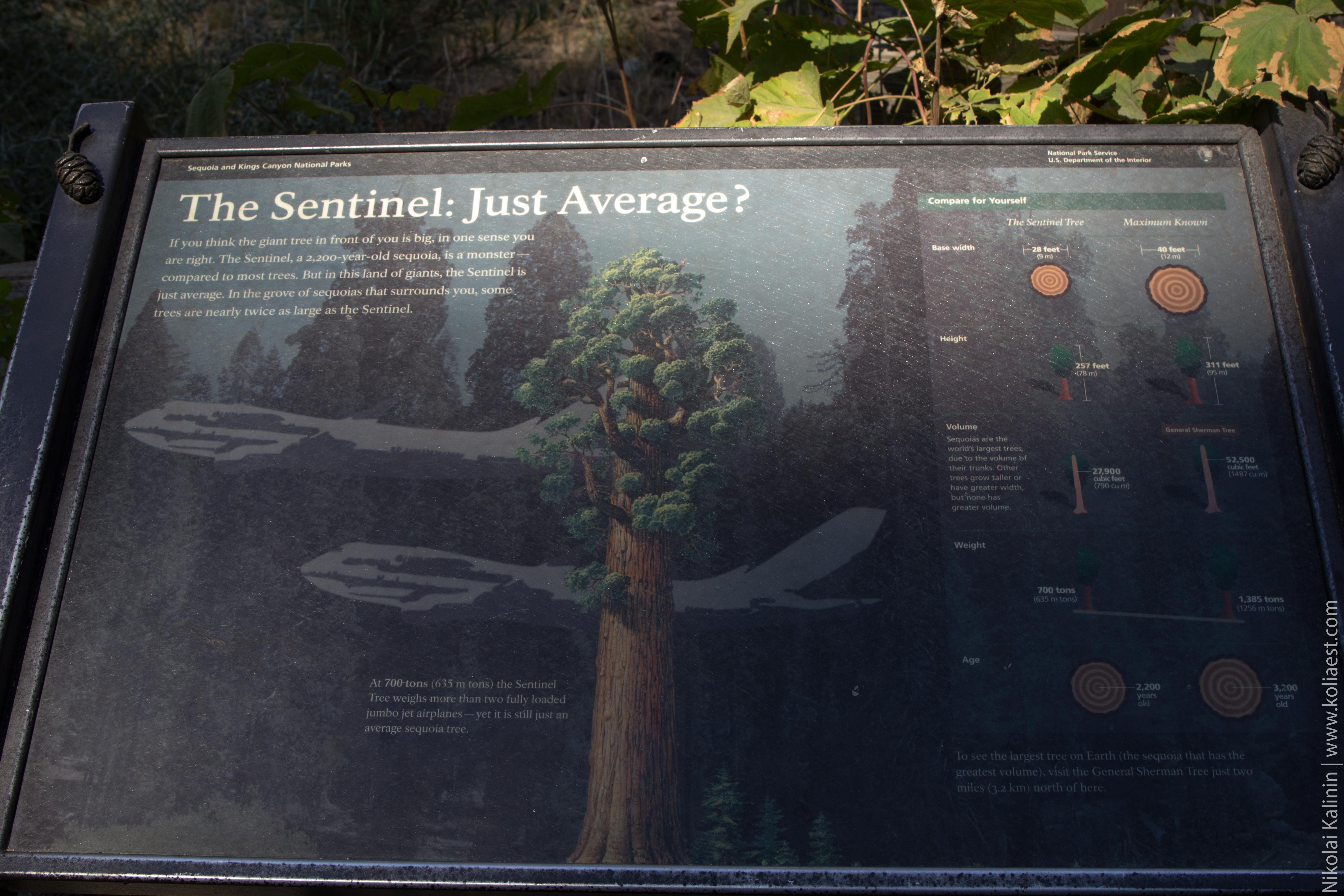 Sequoia-29