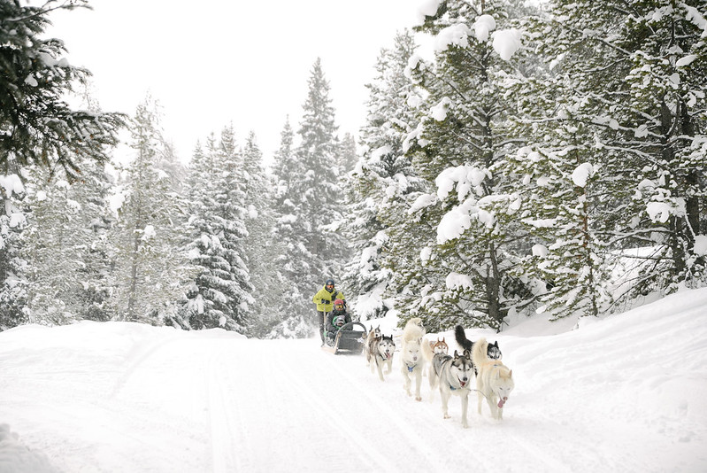 Dog Sledding Colorado
