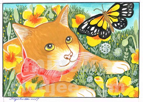 Cat with butterfly and Golden Orange California Poppies