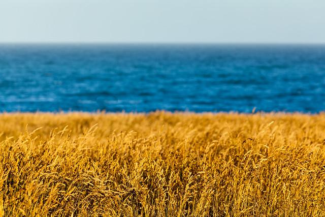 Summer on the Otago Coast