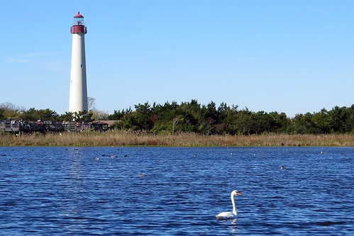 Lighthouse and swan