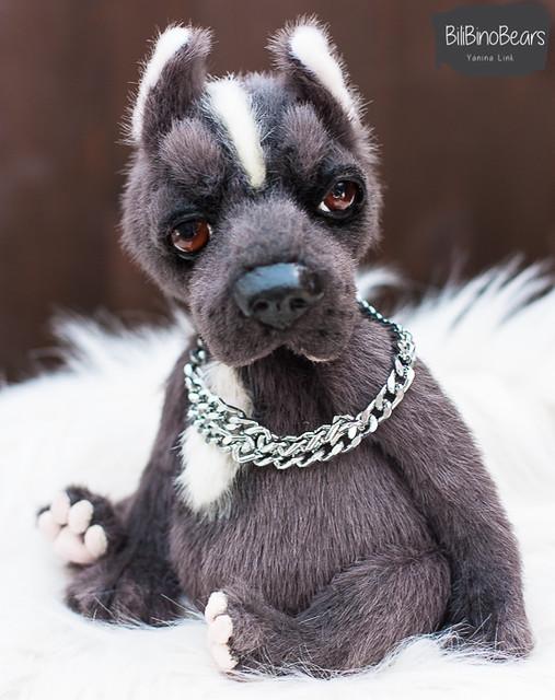 pitbull Zeus