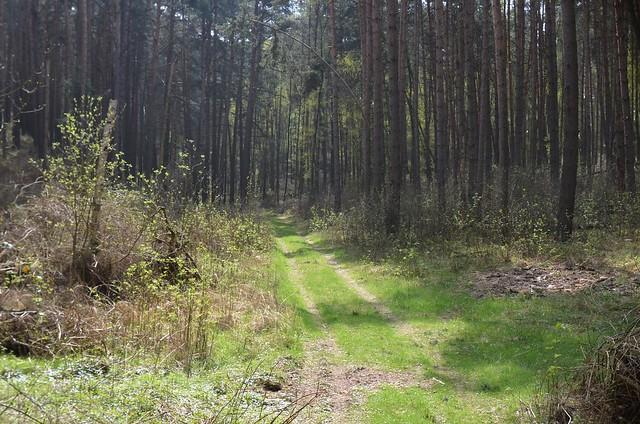 Fläming Rundwanderweg 41 rund um Rädigke