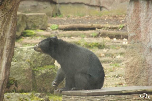 Tierpark Friedrichsfelde 19.03.20172