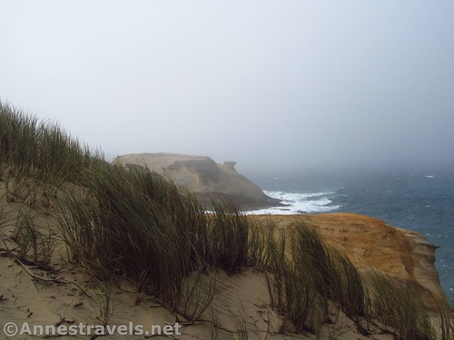 Sea grass at Cape Kiwanda, Oregon