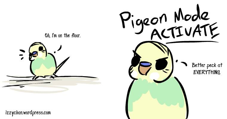 budgie dennis on the floor pigeon mode peck at everything