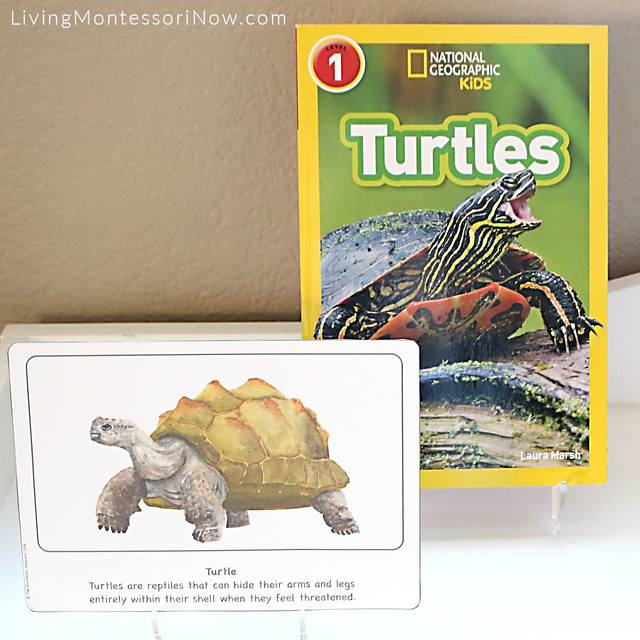 Turtle Culture Card and National Geographic Kids Turtles Book