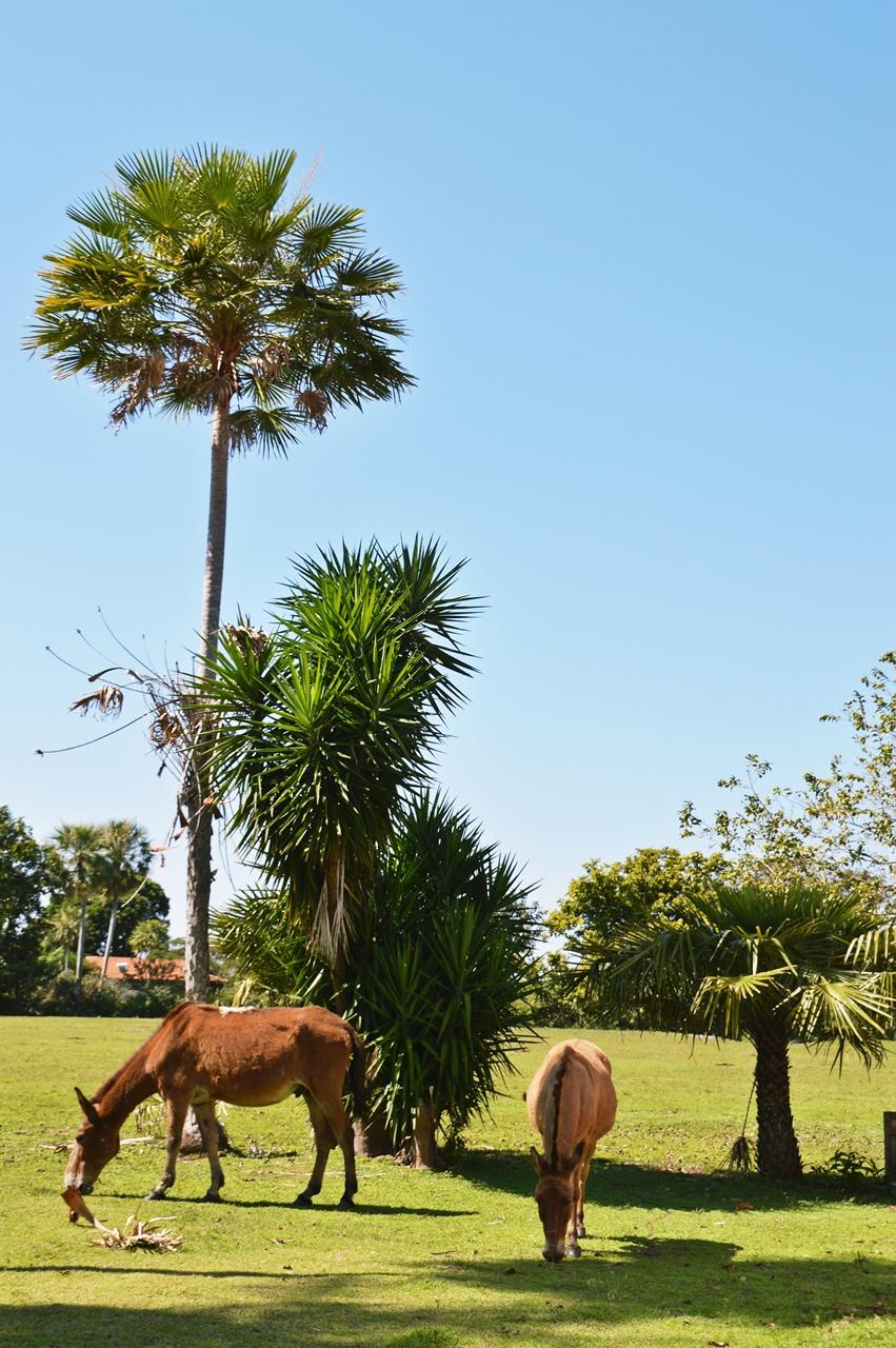 pantanalanimals12