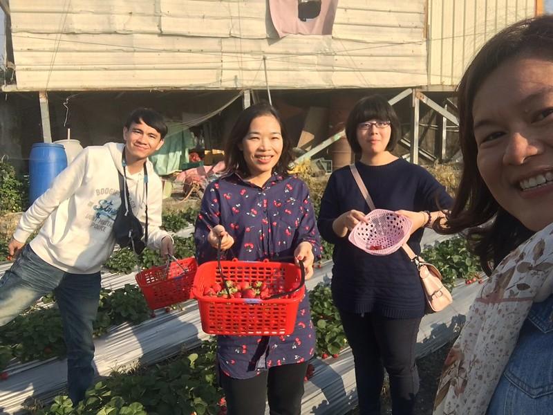 雲林林內採草莓