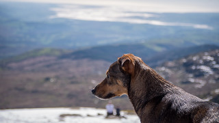 Ben Gerrish's dog | by CoticLtd
