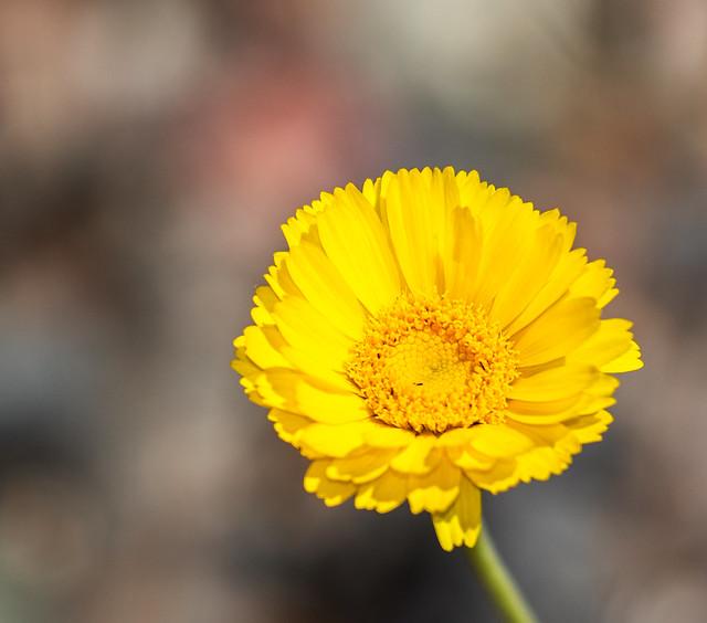 Wild-Flower-2-7D2-040117