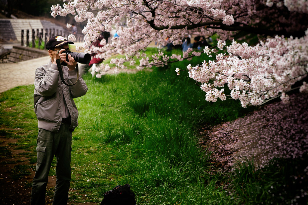 The Ultimate Cherry Blossom Shot