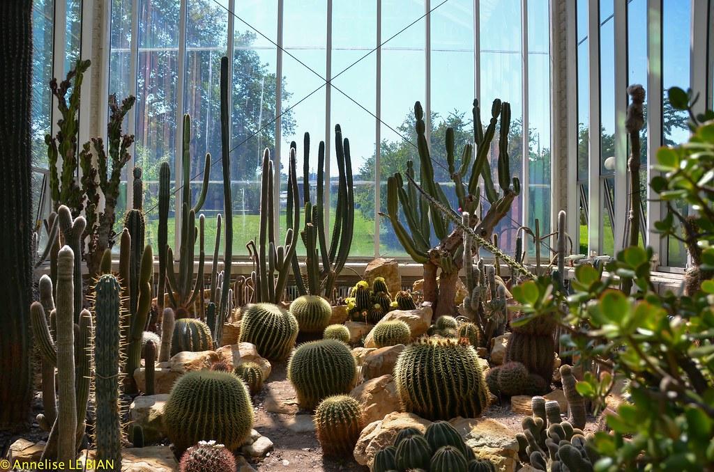 cactus dans la serre tempre du jardin botanique de genve ch by annelise - Jardin Botanique Geneve