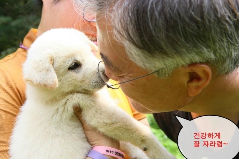 Moon Jae-In's puppies.