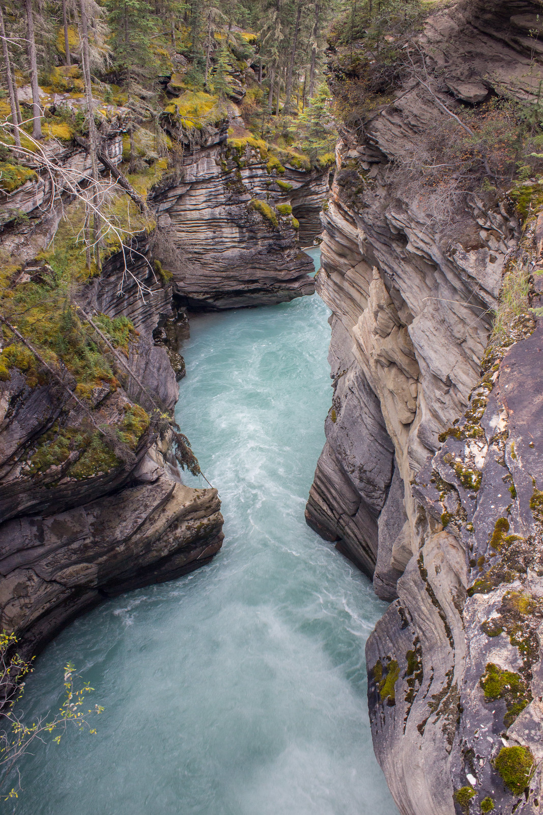 A canyon at Athabasca Falls, Jasper