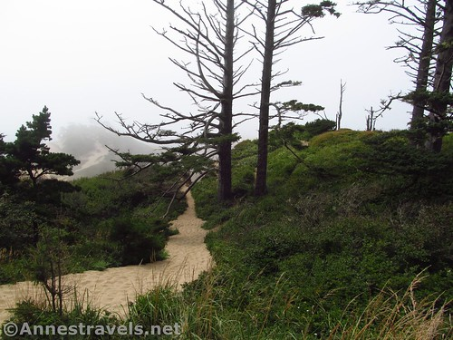 The path atop the dune (after the sheer edges) at Cape Kiwanda, Oregon