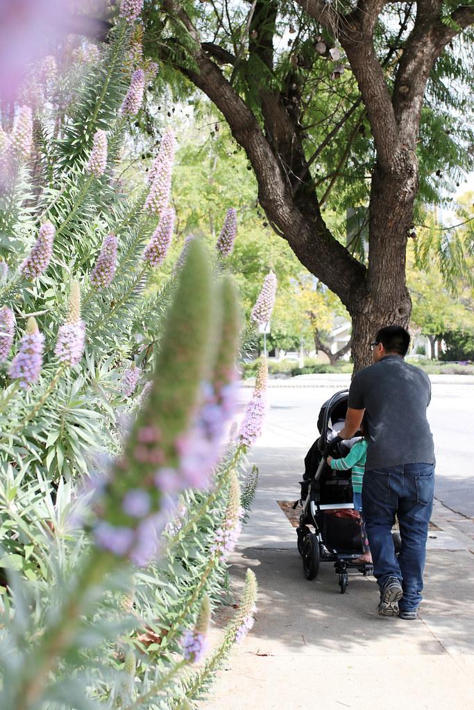 3 kids in a stroller
