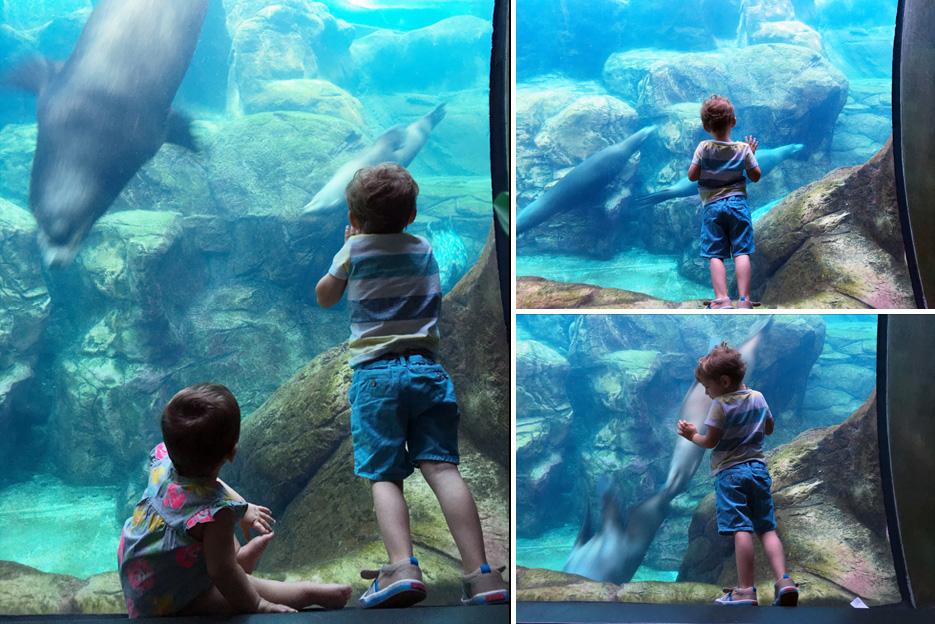 060516_aquarium13