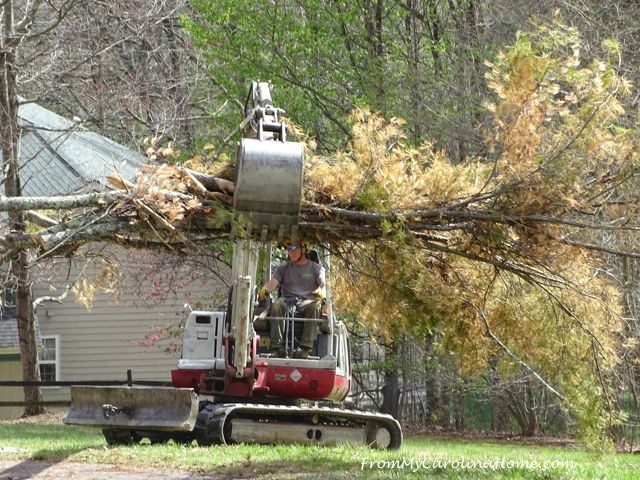Removing the Pine Tree at From My Carolina Home