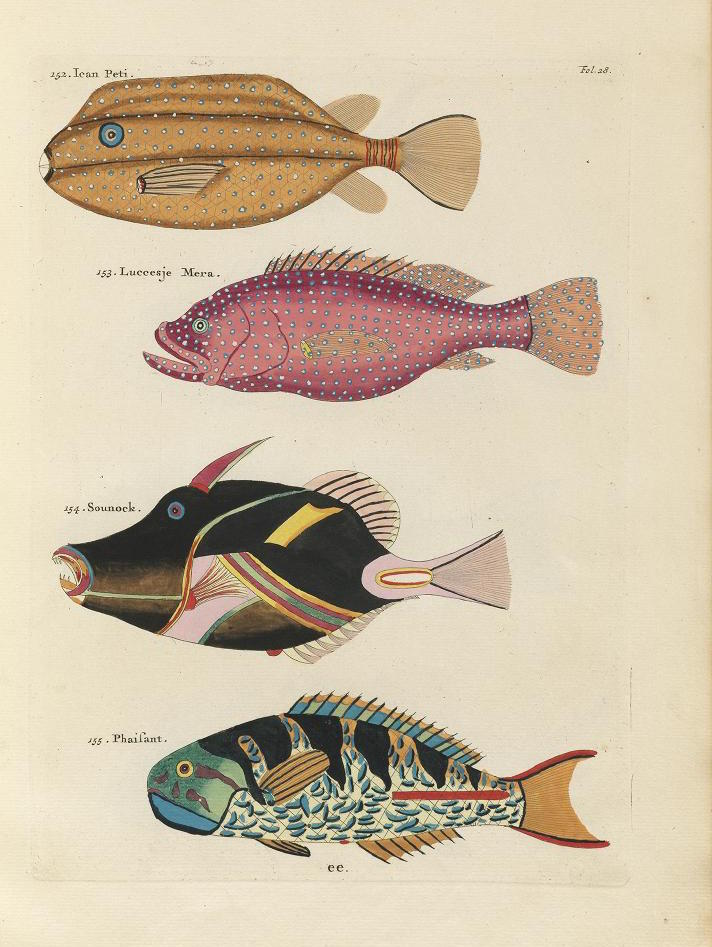 PoissonsecrevisIRena_0075