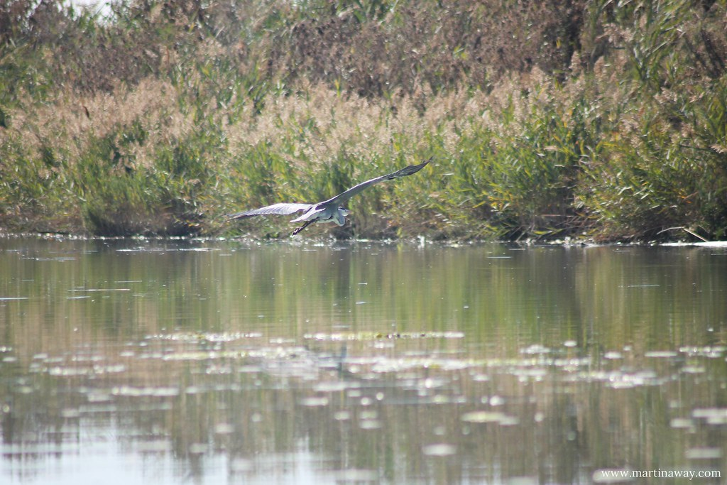 Birdwatching in Romagna: in barca fino a Foce Bevano