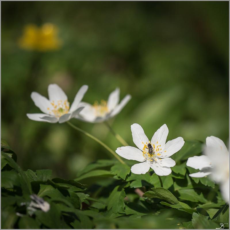 Faune et flore des 3 fontaines 33006532304_acfd166c0a_c