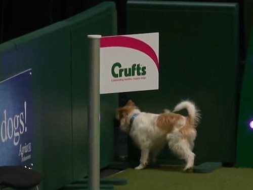 olly-crufts