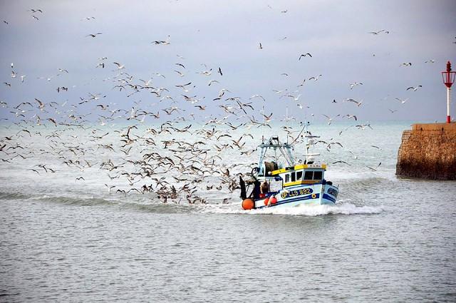 Fish and fishing in the sea - Eric Galbraith