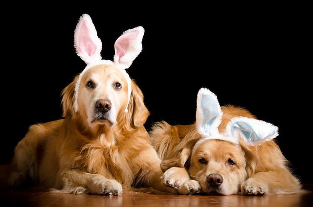 Golden Easter Bunnies