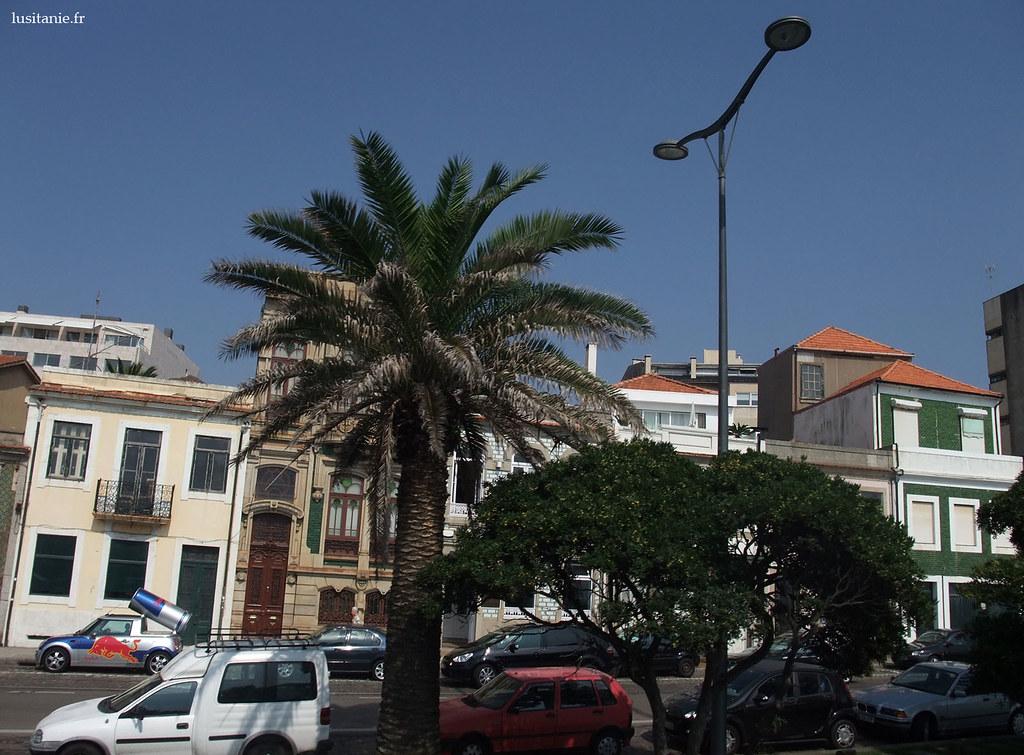 Immense palmier dans la rue