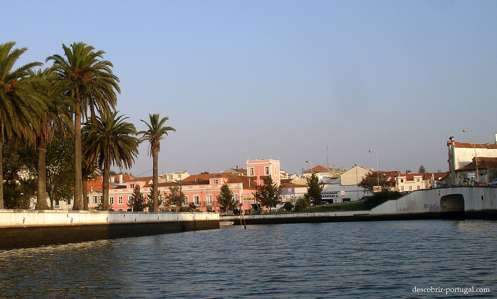 Palmiers et canal