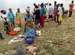 Buying Fish From Usuma Dam Nigeria