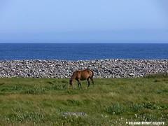 Le cheval en bord de côte.