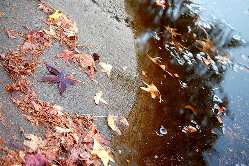 Fall Leaves | by Catherine McGrath