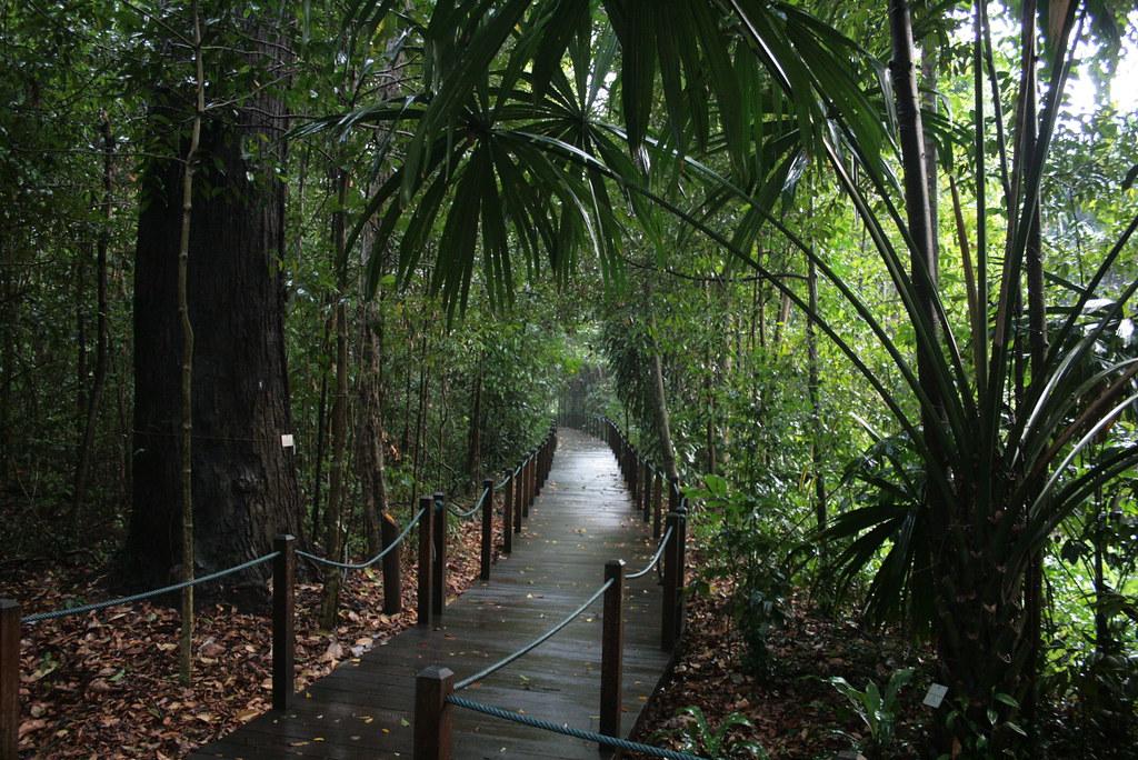 The rainforest walk at Singapore botanic gardens